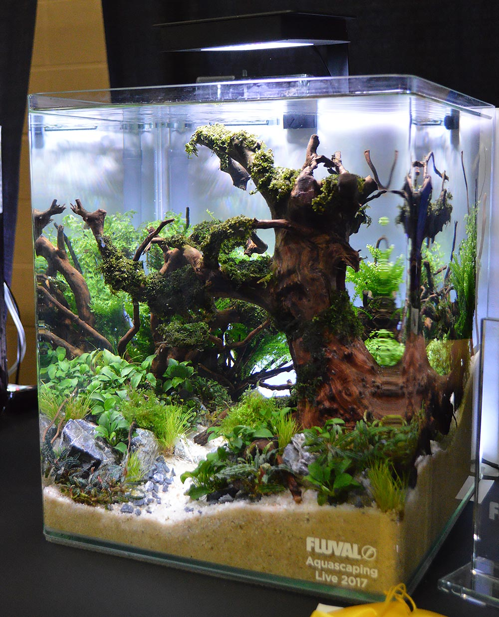 3rd Place Aquascape by Vang Thao