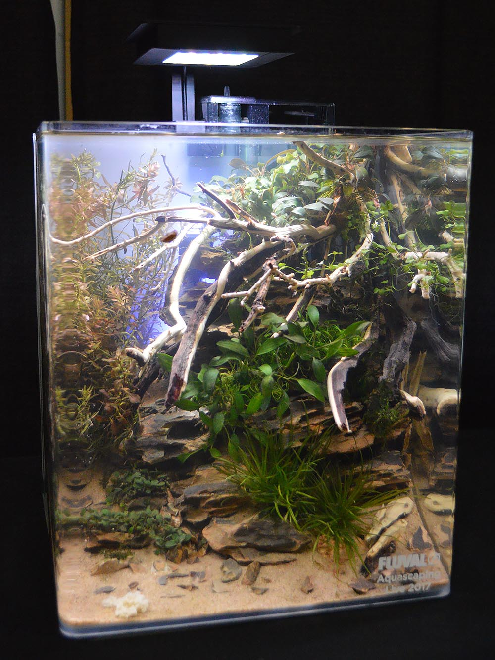 Aquascape by Joe Strybel
