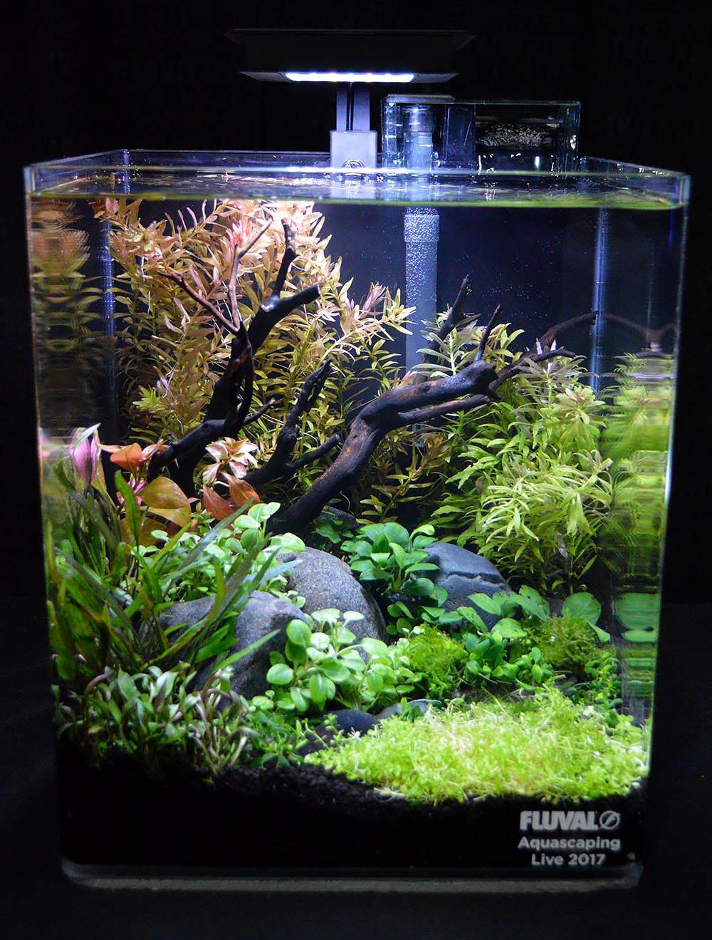 Aquascape by Erachio McCombs