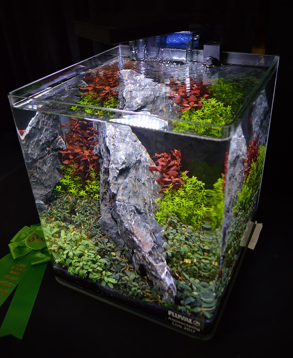 This aquascape by Hunter Koerner took 6th place.