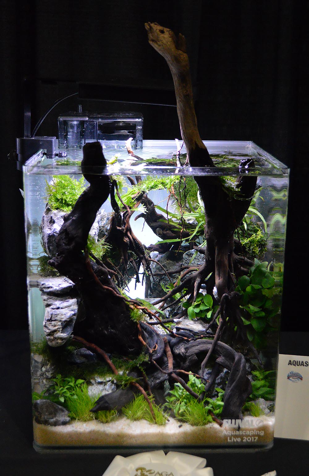 The aquascaping entry from Hiep Hong earned the 4th place ranking.