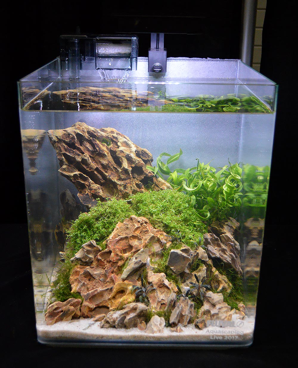 Aquascape by Alex Forsythe