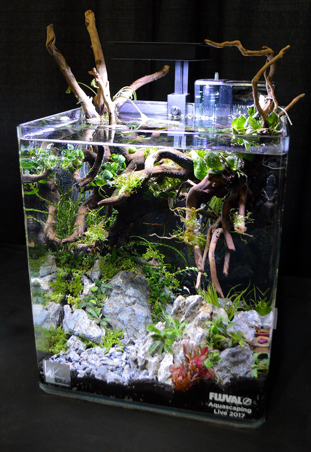 Aquascape by Brian Covey