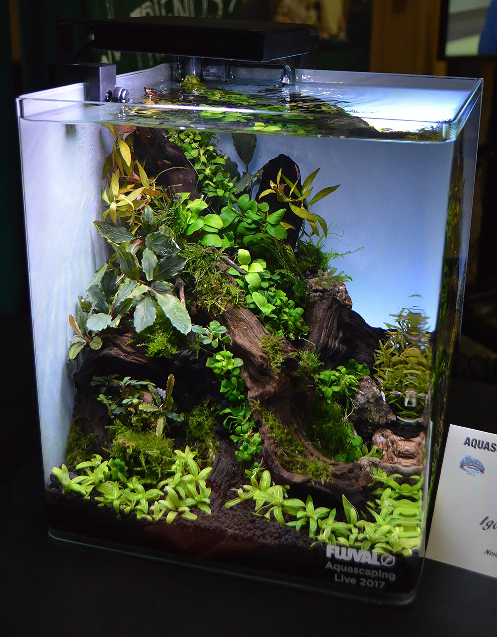 5th place went to the aquascaping entry from Igor Cialenco.
