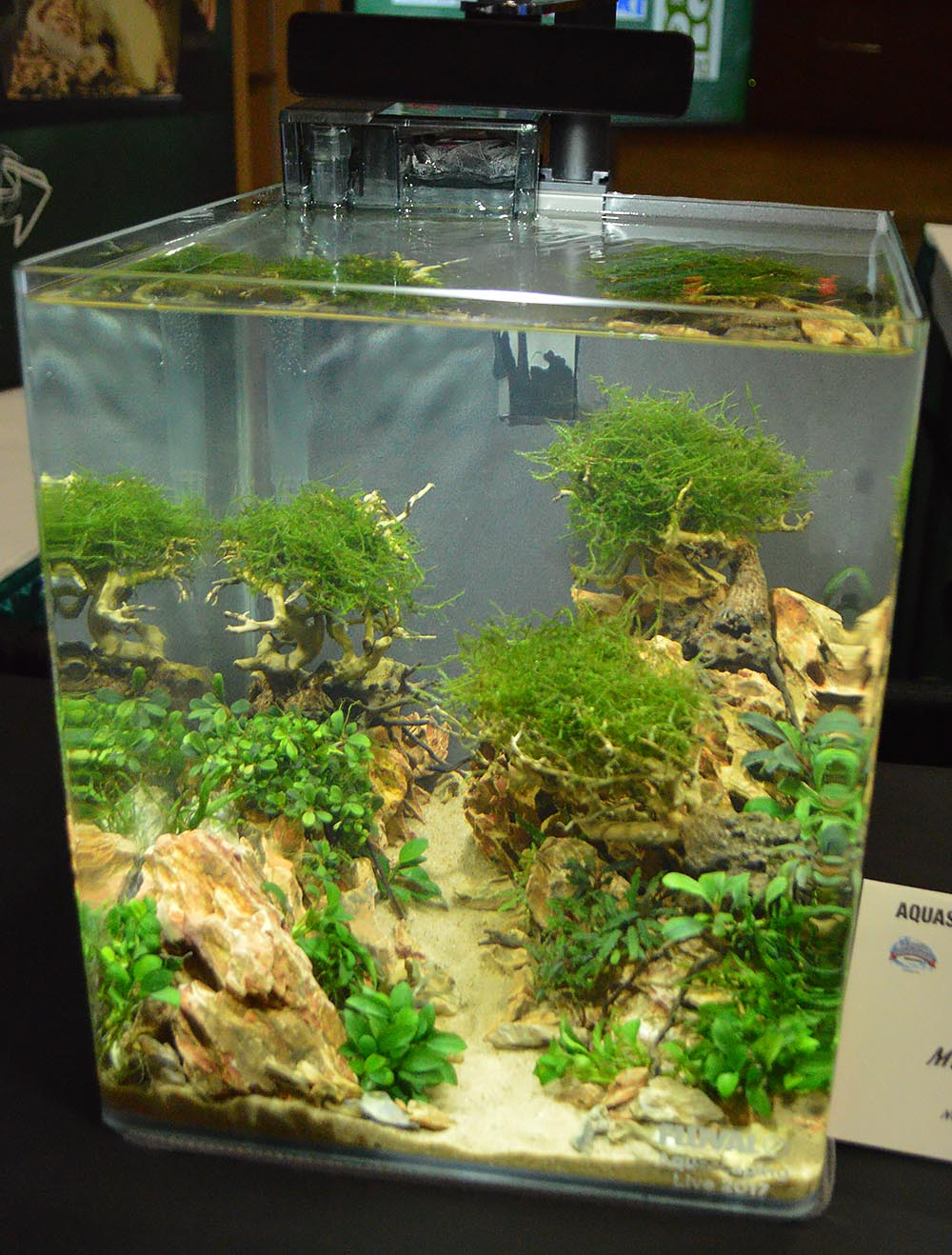 Aquascape by Mike Bernard