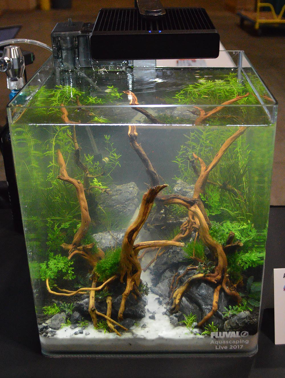 Aquascape by Danny Adams