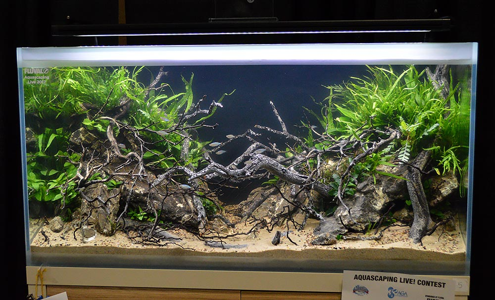 One more look at entry from Phil Kerewich and Jake Zucker, which took the top spot in the 2017 Aquascaping Live! large tank competition.