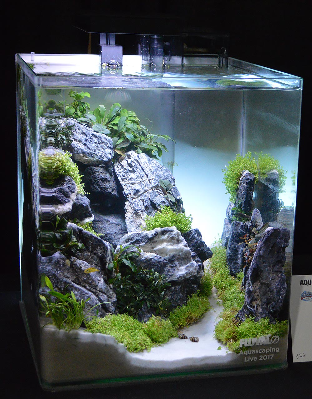 Aquascape by Kory Smith