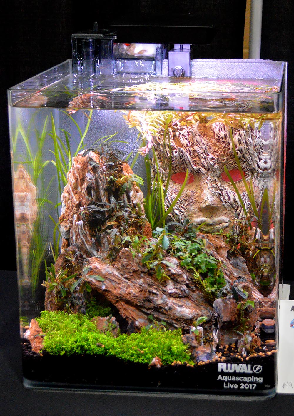 A second look at Sean Peck's entry, with a subtle difference noticed the second day. Lighting seems to be playing an important role in aquascaping these days!