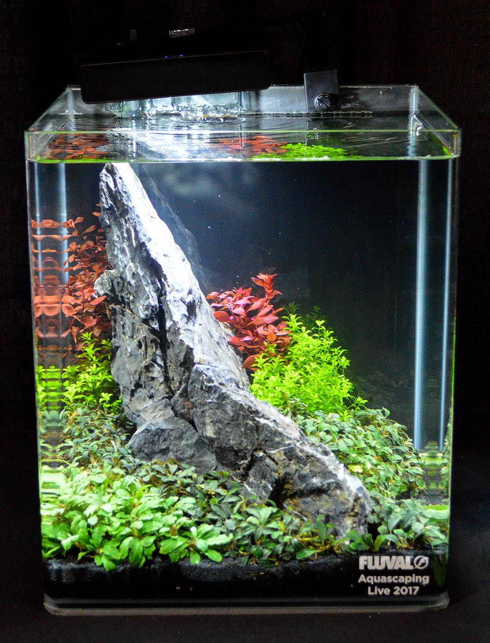 Hunter Koerner's 6th place aquascape seen from a different perspective.