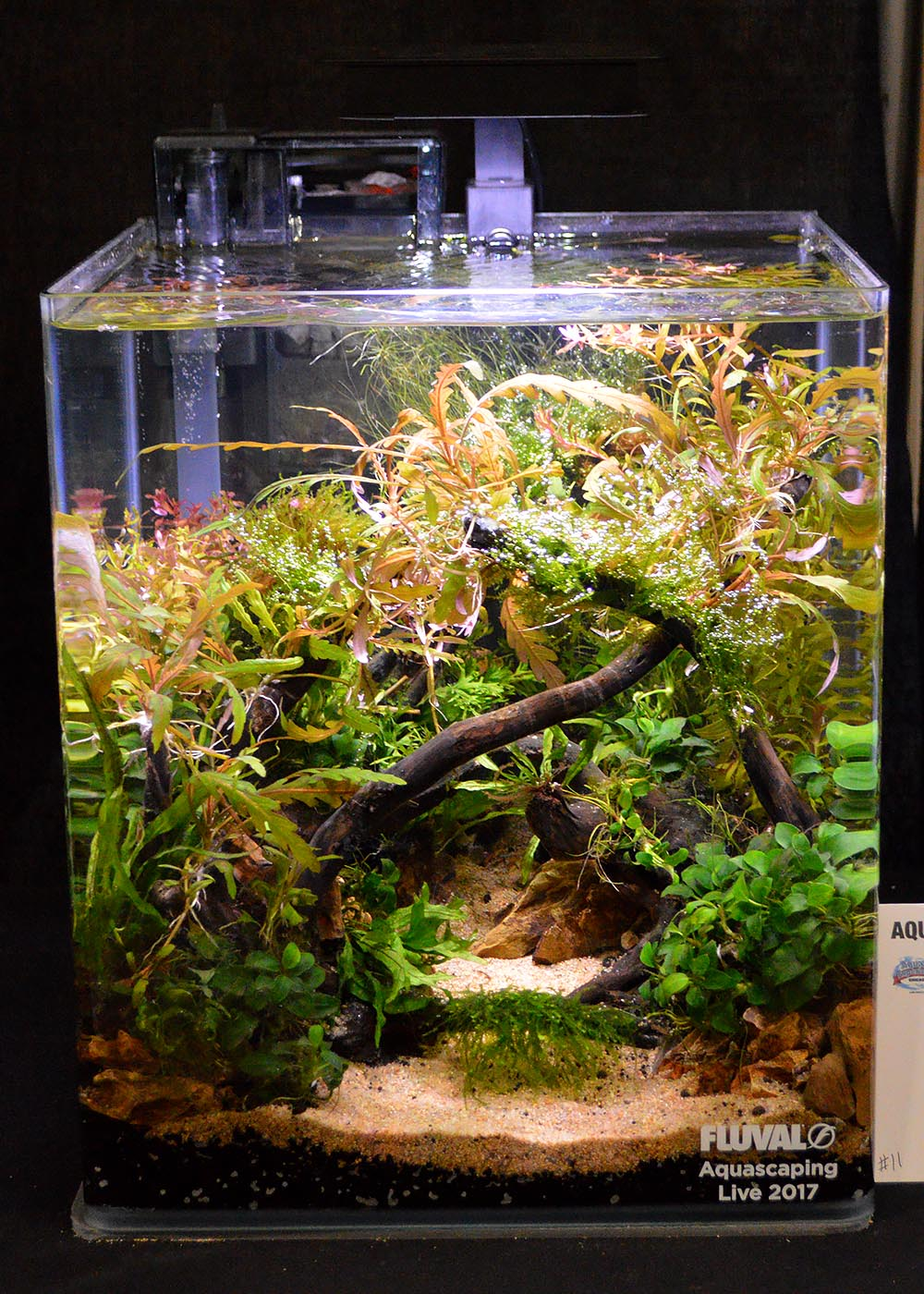 Aquascape by Kevin Kelly