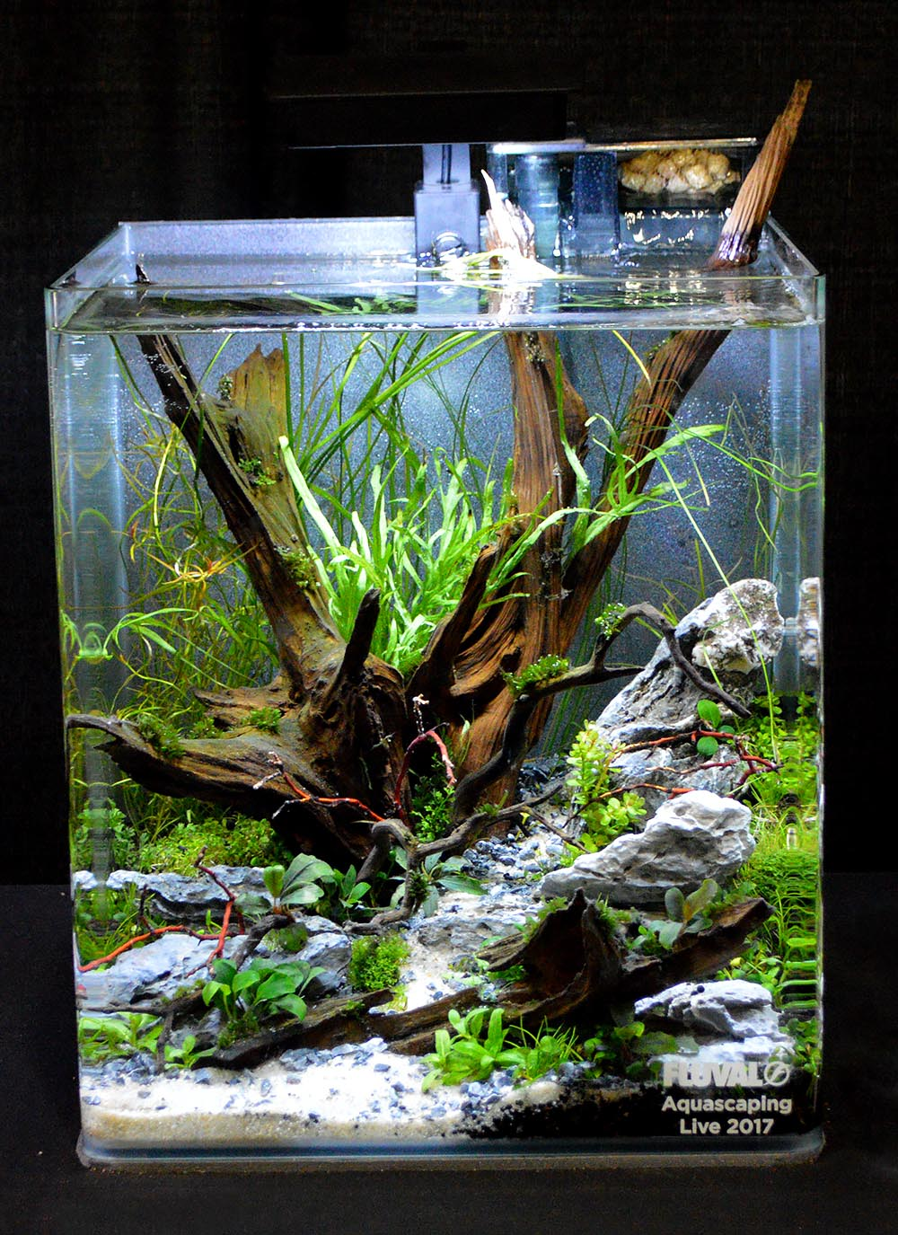 Aquascape by Amanda Elridge
