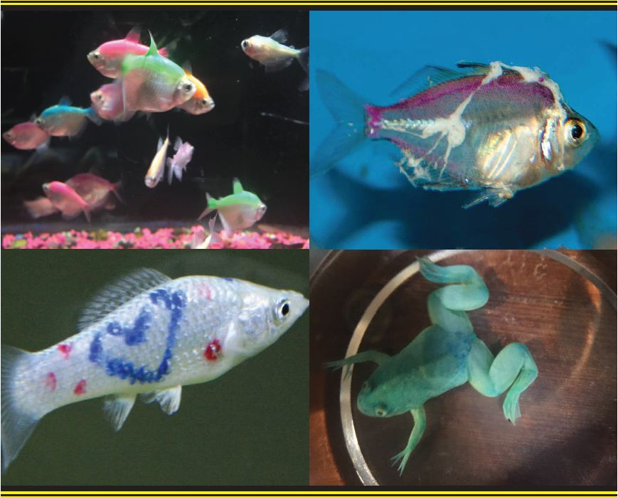 Green Bay Aquarium Society launches a campaign to end the trade in dyed fish and amphibians in their regional market.