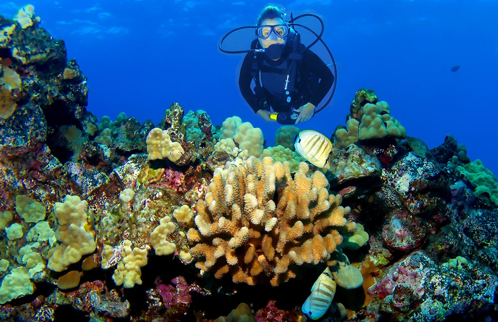 A diver surveys a Kona Reef.
