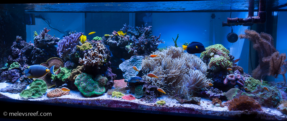 An updated view of the reef, taken mid-January, 2018.