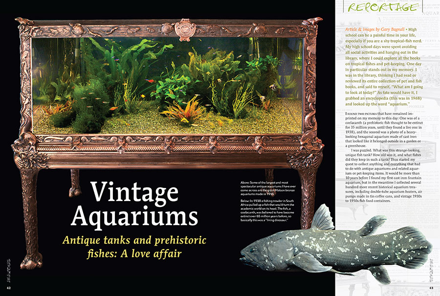 Gary Bagnall confesses his love affair with antique tanks and prehistoric fishes in his article Vintage Aquariums.