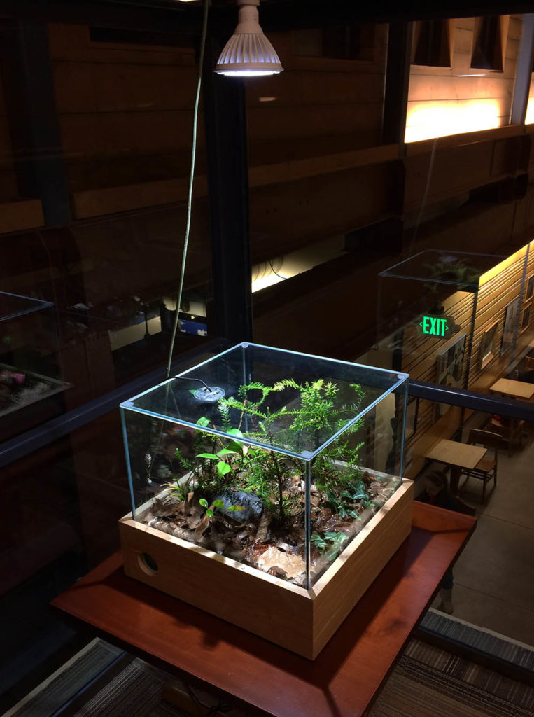 Terrarium Enclosure with LED LIghting