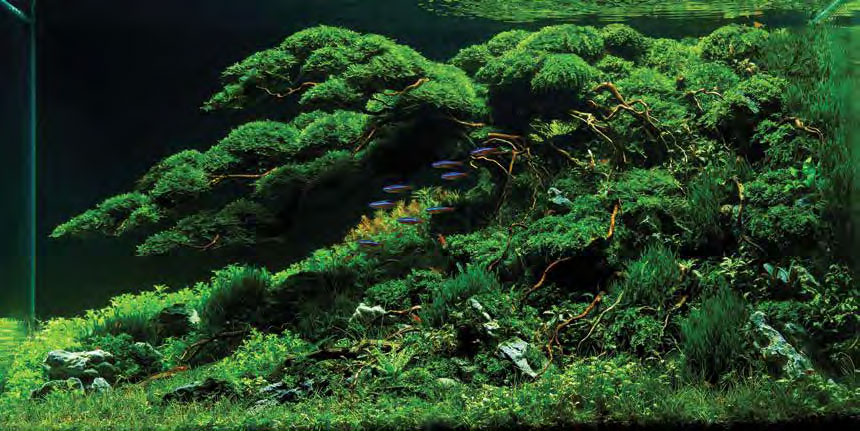 """Follow Me 2,"" 2017 Winner of the 60-120 L category. Aquascape by Heri Amir from Malang, East Java Indonesia"