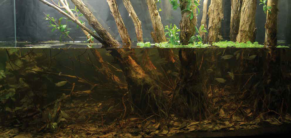 """Submerged Melaleuca Forest,"" 2017 Winner of the Biotope aquascape category. Aquascape by Tran Hoang Nghia from Can Tho, Viet Nam."