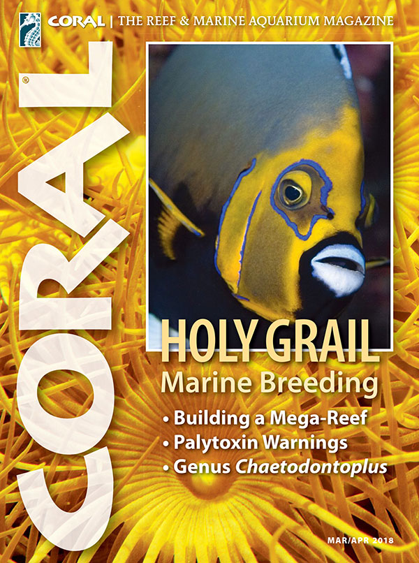 The cover of CORAL Magazine Volume 15, Issue 2 – HOLY GRAIL MARINE BREEDING – March/April 2018. On the cover: the highly coveted Conspicuous Angelfish, Chaetodontoplus conspiculatus, photographed in the wild by Frank Baensch. In the background, Yellow Zoanthid Polyps, photographed by Daniel Knop.