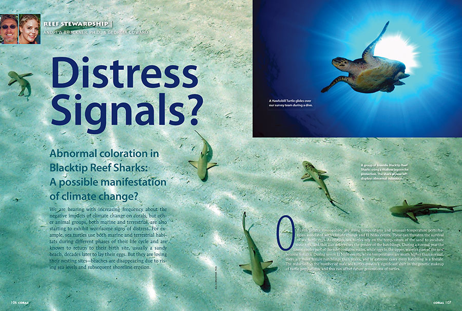 Dr. Andrew Bruckner and Georgia Coward close out our issue with the latest Reef Stewardship installment: Distress Signals? Are elevated water temperatures, components of climate change, responsible for abnormal color pattern development in Blacktip Reef Sharks?!