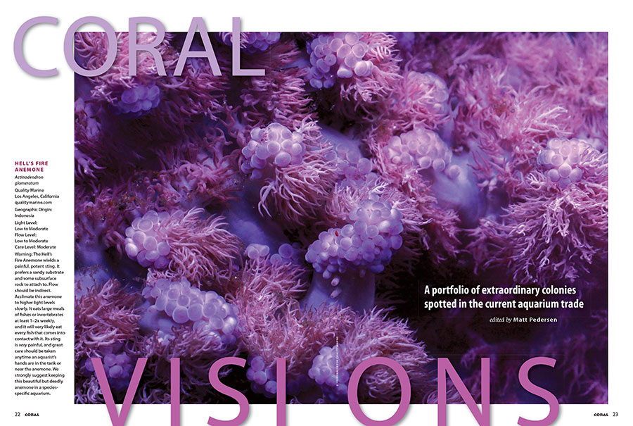 What is this stunning purple cnidarian, photographed by Eli Fleishauer of Quality Marine, which opens this issue's CORAL VISIONS column? You'll have to read the newest issue to find out!