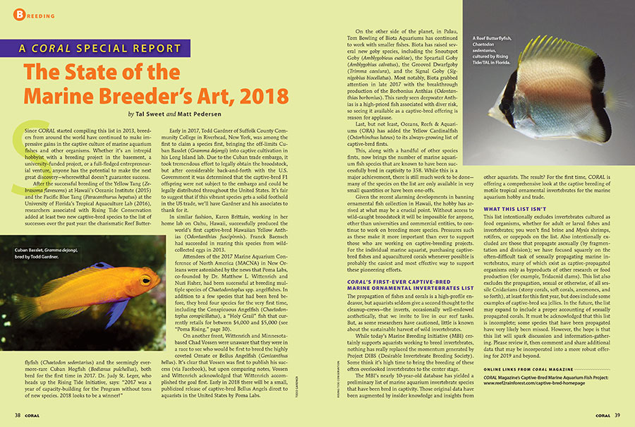 Postponed an issue later than usual, our annual State of the Marine Breeder's Art report, for 2018, returns with several exciting additions. Tal Sweet and Matt Pedersen from the Marine Breeding Initiative once again take stock of marine ornamental fish breeding, with a new twist; we're excited to introduce the cursory, first compilation, of a captive-bred marine ornamental invertebrate species list!