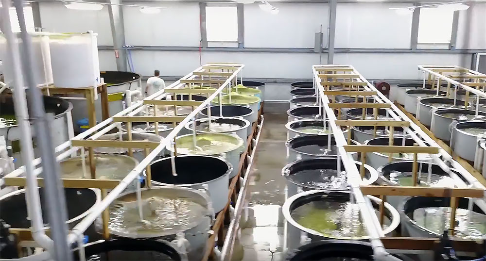 Take a quick flight through a large scale commercial ornamental marine fish hatchery: Proaquatix, based in Vero Beach, FL.