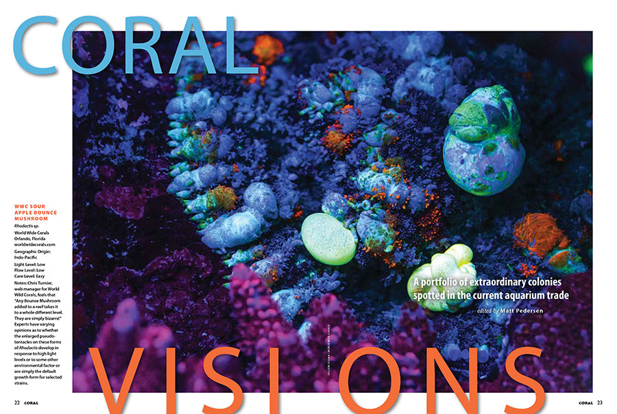 Looking like a deep space image captured by the Hubble Telescope, this other-worldly macro photograph of the World Wide Corals Sour Apple Bounce Mushroom opens the May/June edition of CORAL VISIONS. You'll have to turn the pages of the magazine to see what else made it into print this issue!