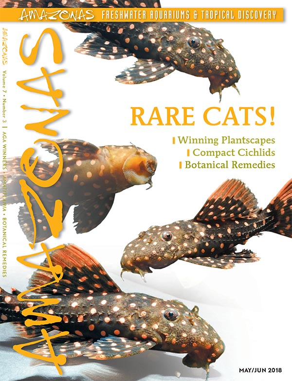 "AMAZONAS Magazine, Volume 7, Number 3, RARE CATS!, an issue dedicated to the quirky species that breeding could one day make available to more hobbyists. On the cover: Pseudacanthicus sp. LDA 105 ""Typhoon"", images by Hans-Georg Evers."