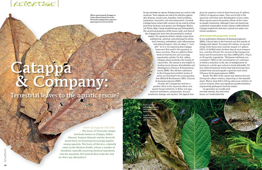 Petra Fitz examines the science behind Catappa (Indian Almond) leaves as they're used in the aquarium, and illustrates some alternatives as well.