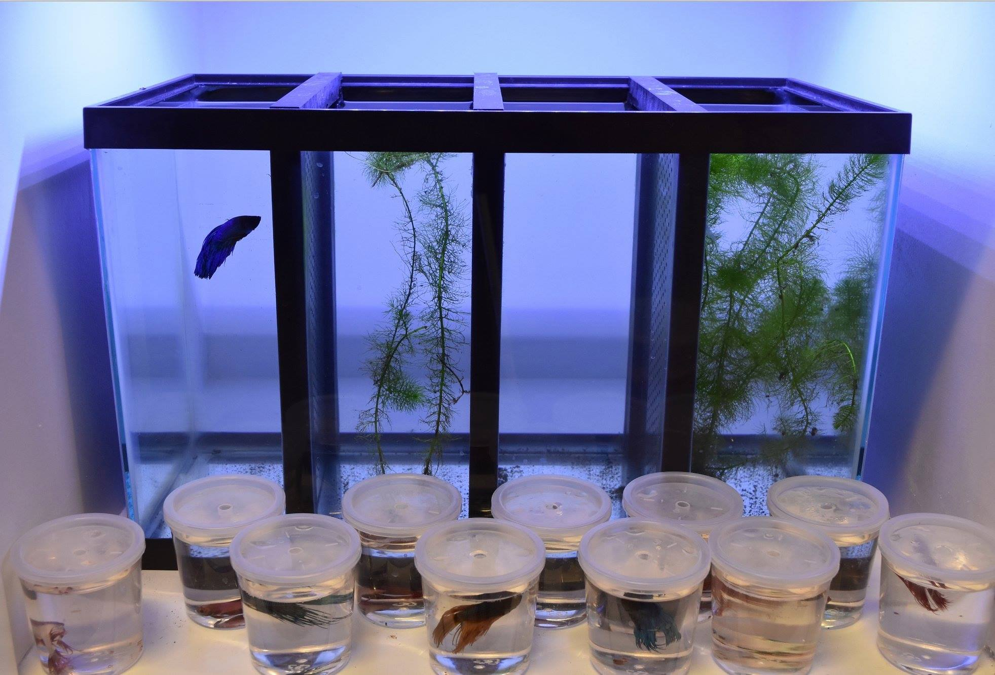 us made dexter s aquarium dividers offer robust form and fit