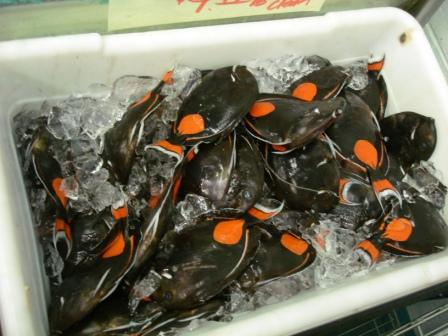 hawaii s marine fish collection ban expands to recreational fishermen