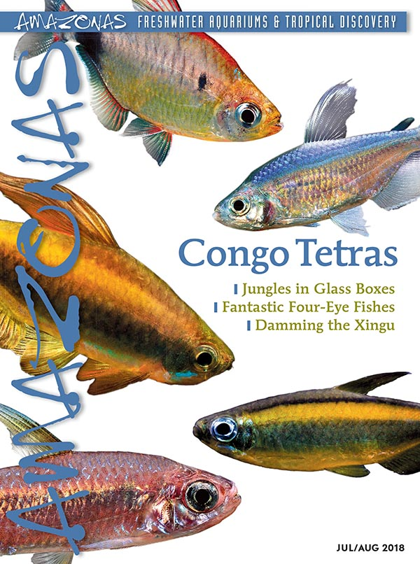 AMAZONAS Magazine, Volume 7, Number 4, CONGO TETRAS, offers advice on the care and breeding of both classic and new species from Central Africa. On the cover: a composite of tetras from the Congo, family Alestidae. Images: F. Wang.