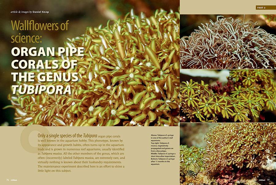 Daniel Knop's investigation of Organ Pipe corals of the genus Tubipora returns in Wallflowers of Science, Part II. You can read Part I in the January/February 2018 issue of CORAL Magazine.