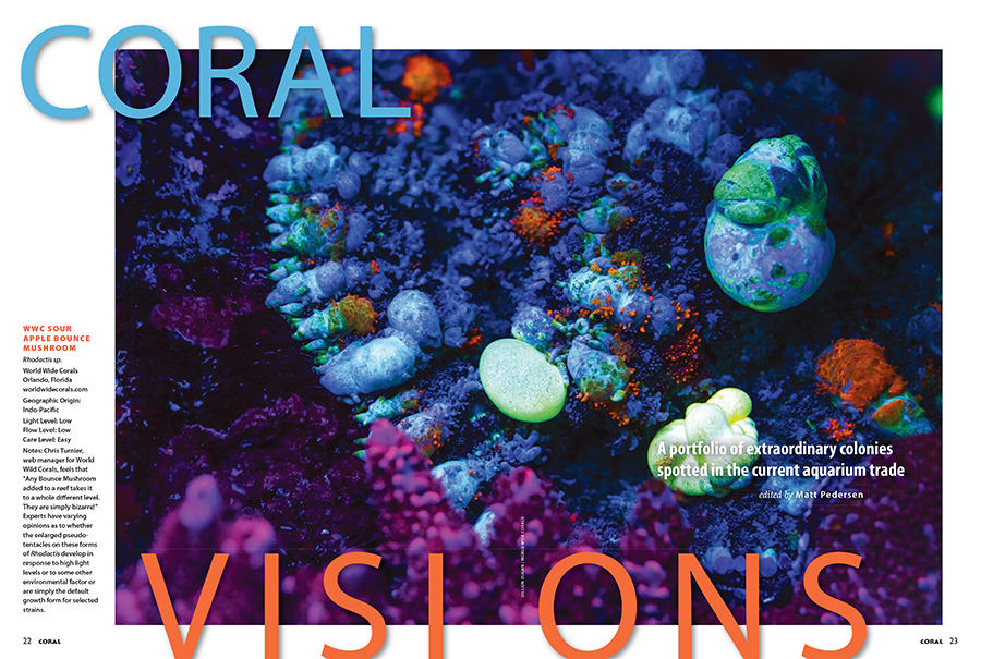 CORAL VISIONS returns with another bountiful selection of truly stunning corals offered up by leading coral farmers, wholesalers and retailers.