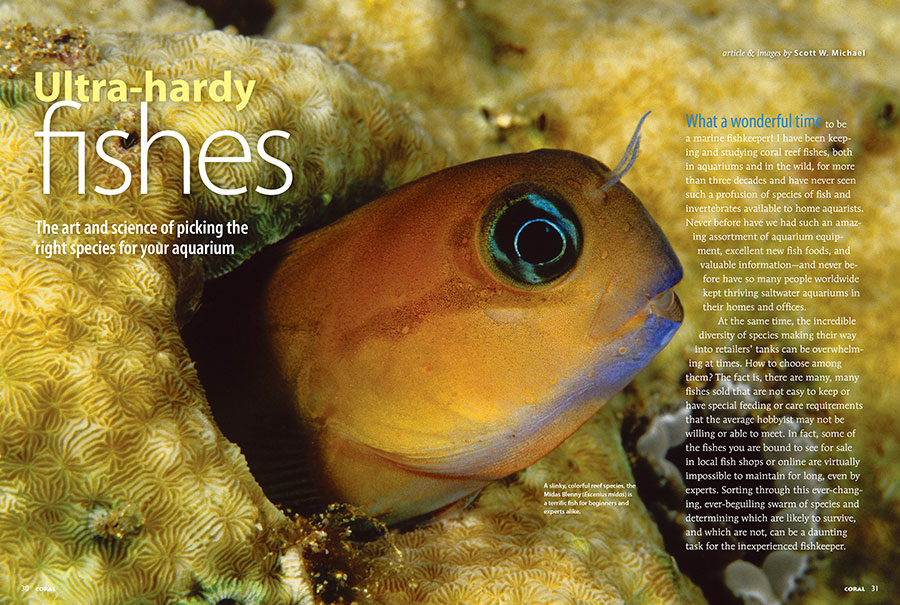 Our cover features being with Scott MIichael's look at Ultra-Hardy Fishes. Seen here is one example, a slinky, colorful reef species, the Midas Blenny (Escenius midas) is a terrific fish for beginners and experts alike. Turn the pages of your new CORAL Magazine and discover more.