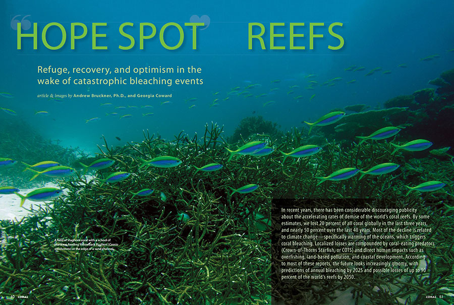 Does the never-ending news of coral reef bleaching events just wear you down? Then Hope Spot Reefs, which investigates refuge, recovery, and optimism in the wake of catastrophic bleaching events, is the antidote.