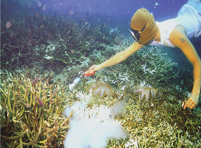 Collecting marine ornamental fishes for the aquarium trade using cyanide administered from a squirt bottle. Photo: James Cervino/NOAA.