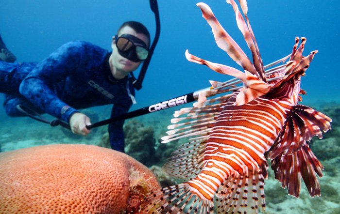 Sport divers are taking an increasing toll on inshore Pterois lionfish in Florida waters. Image: Florida Sportsman