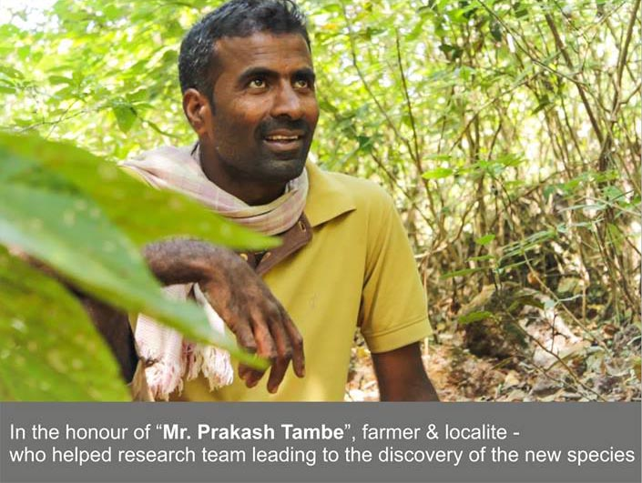 Mr. Prakash Tambe, the namesake for the common name of Prakash Barb for the newly-described Pethia sahit. Image credit: Unmesh Katwate