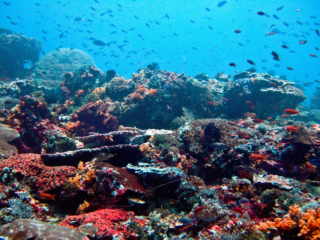 Nusa Lembongan Reef, Bali, Indonesia. Image credit: Ilse Reijs and Jan-Noud Hutten, CC BY 2.0