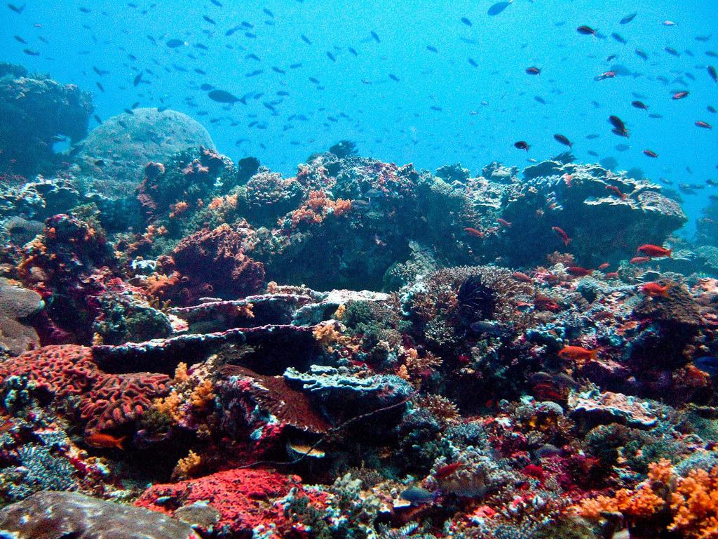 Nusa Lembongan Reef, Bali, Indonesia. Image credit: Ilse Reijs and Jan-Noud Hutten, CC BY 2.0