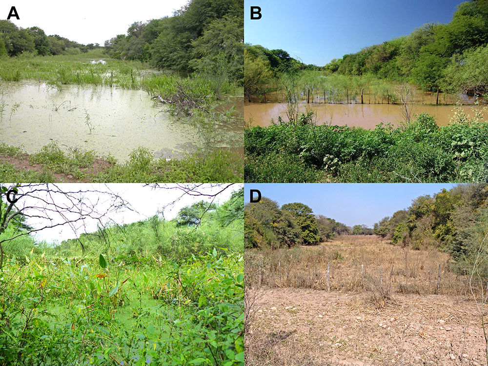 Fig 6. Type locality of Austrolebias wichi, which is also home to the only currently known population of the new species. This ephemeral pond is depicted over the year: (A) January 2006, (B) January 2014, (C) April 2017, (D) August 2012. Image Credit: Alonso et. al.
