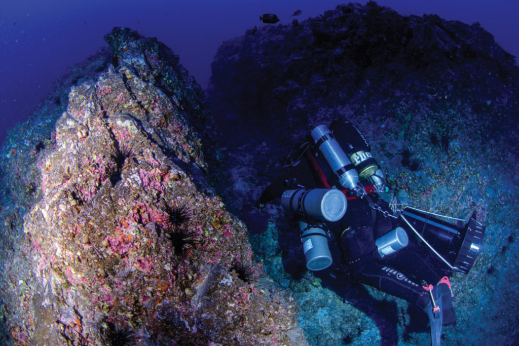 Collection site of the holotype 83 m depth, Hanga Piko, Rapa Nui (Easter Island, Chile). Image Credit: ZooKeys/Dr. Luiz Rocha