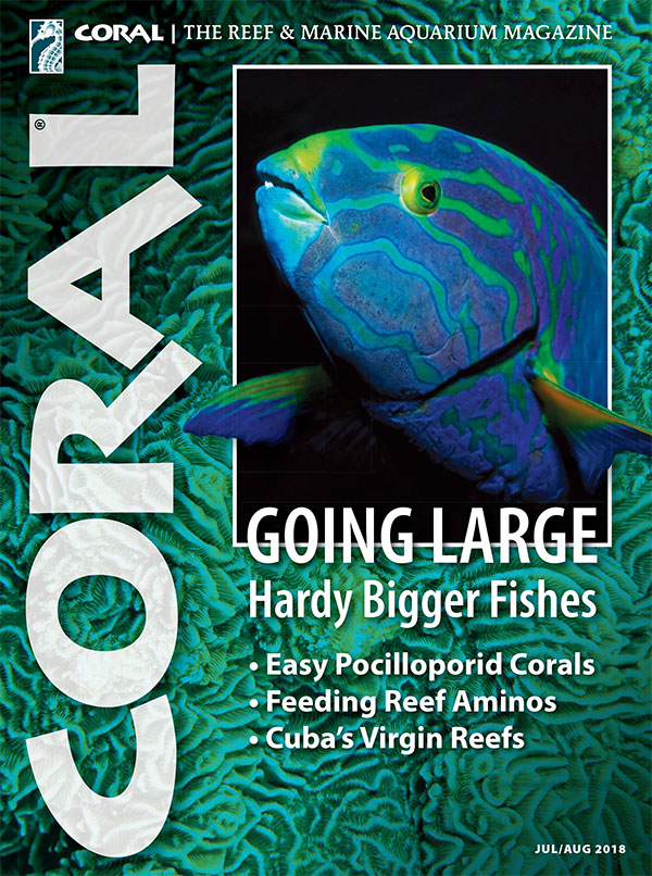 The cover of CORAL Magazine Volume 15, Issue 4 – HARDY BIGGER FISHES – July/August 2018. On the cover: Sunset Wrasse, Thalassoma lutescens. Gary Bell ©OceanwideImages.com. In the background: Pachyseris rugosa, Janine Cairns-Michael.