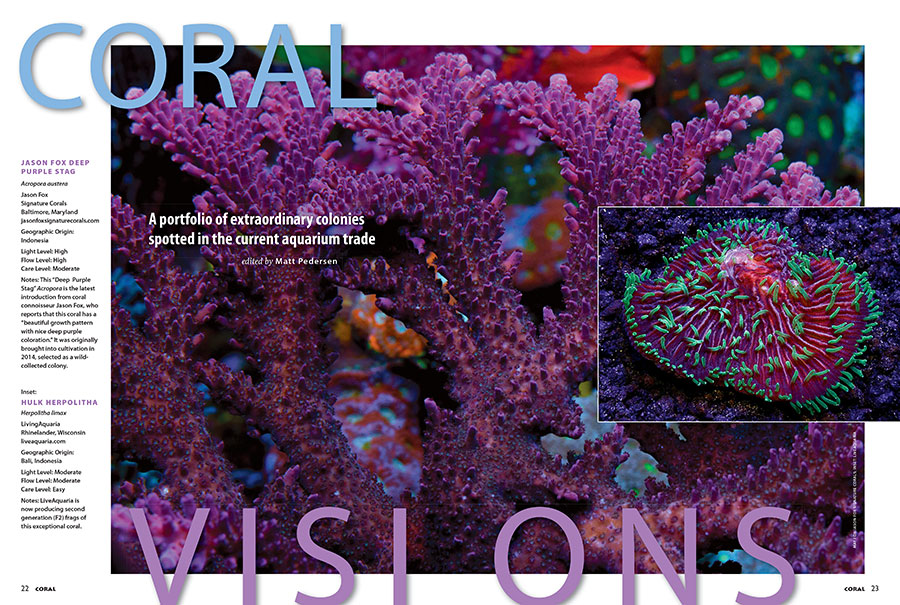Our first double-feature opening spread for Coral Visions features the newest introduction from Jason Fox Signature Corals and a stunning Herpolitha being cultured by LiveAquaria in Rhinelander, WI. Turn the pages to discover what else awaits!