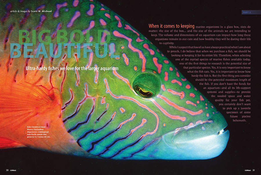 Big, Bold, Beautiful: Scott Michael introduces us to the ultra-hardy fishes we love for larger aquariums.