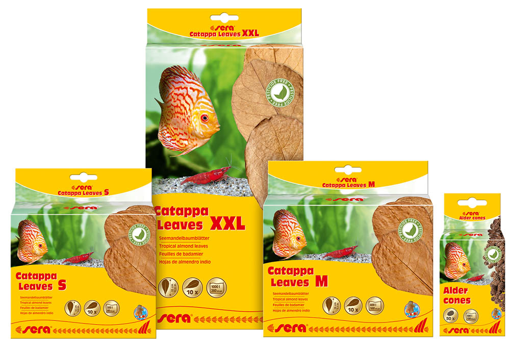Pesticide-free Catappa Leaves and Alder Cones from sera