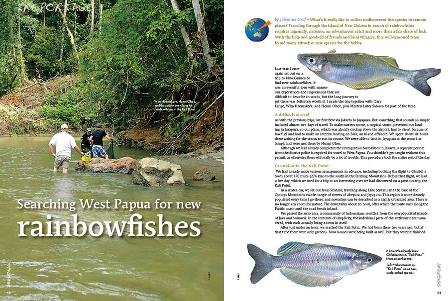 Johannes Graf tells the tale of joining Gary Lange, Wim Heemskerk, Henni Ohee, and Marten Luter Salossa for a journey deep into the wilderness of Indonesia's West Papua in search of long-lost rainbowfishes and new species as of yet undiscovered. What did they find?